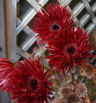 花ギフト|フラワーギフト|誕生日 花|カノシェ話題|スタンド花|ウエディングブーケ|花束|花屋|スパイダー