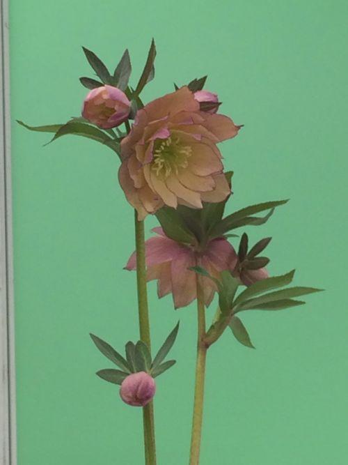 花ギフト|フラワーギフト|誕生日 花|カノシェ話題|スタンド花|ウエディングブーケ|花束|花屋|IMG_9520