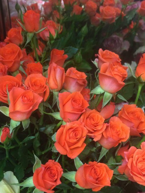 花ギフト|フラワーギフト|誕生日 花|カノシェ話題|スタンド花|ウエディングブーケ|花束|花屋|IMG_8101