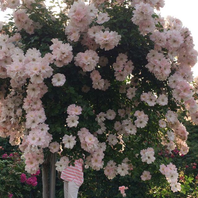 花ギフト|フラワーギフト|誕生日 花|カノシェ話題|スタンド花|ウエディングブーケ|花束|花屋|IMG_1493