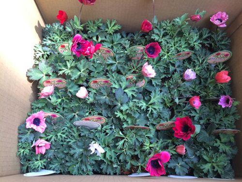 花ギフト|フラワーギフト|誕生日 花|カノシェ話題|スタンド花|ウエディングブーケ|花束|花屋|IMG_9826