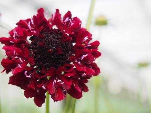花ギフト|フラワーギフト|誕生日 花|カノシェ話題|スタンド花|ウエディングブーケ|花束|花屋|P1010091