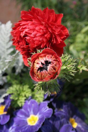 花ギフト|フラワーギフト|誕生日 花|カノシェ話題|スタンド花|ウエディングブーケ|花束|花屋|517cf0c2
