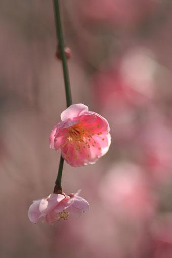 花ギフト|フラワーギフト|誕生日 花|カノシェ話題|スタンド花|ウエディングブーケ|花束|花屋|ume-p