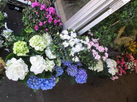 花ギフト|フラワーギフト|誕生日 花|カノシェ話題|スタンド花|ウエディングブーケ|花束|花屋|hatimono