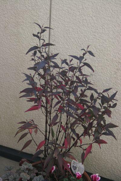 花ギフト|フラワーギフト|誕生日 花|カノシェ話題|スタンド花|ウエディングブーケ|花束|花屋|IMG_6597