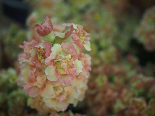 花ギフト|フラワーギフト|誕生日 花|カノシェ話題|スタンド花|ウエディングブーケ|花束|花屋|P1010002