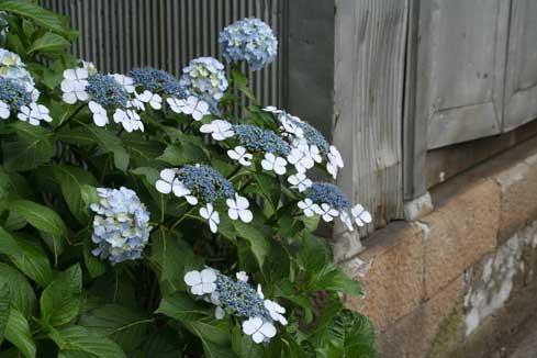 花ギフト フラワーギフト 誕生日 花 カノシェ話題 スタンド花 ウエディングブーケ 花束 花屋 がく