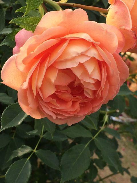 花ギフト|フラワーギフト|誕生日 花|カノシェ話題|スタンド花|ウエディングブーケ|花束|花屋|IMG_1481