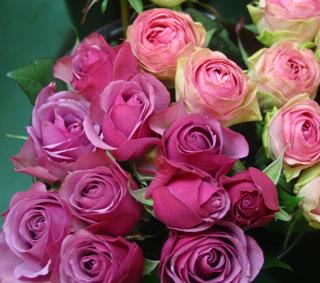 花ギフト|フラワーギフト|誕生日 花|カノシェ話題|スタンド花|ウエディングブーケ|花束|花屋|シセロ