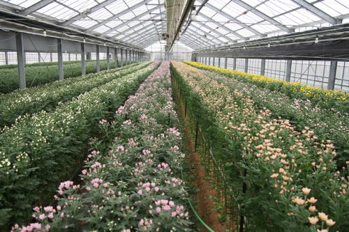 花ギフト|フラワーギフト|誕生日 花|カノシェ話題|スタンド花|ウエディングブーケ|花束|花屋|P1011354