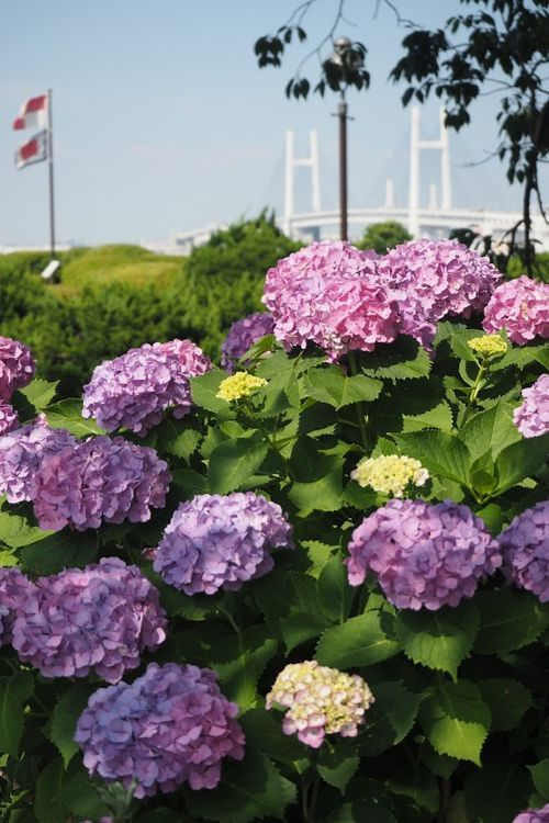 花ギフト|フラワーギフト|誕生日 花|カノシェ話題|スタンド花|ウエディングブーケ|花束|花屋|P6102968