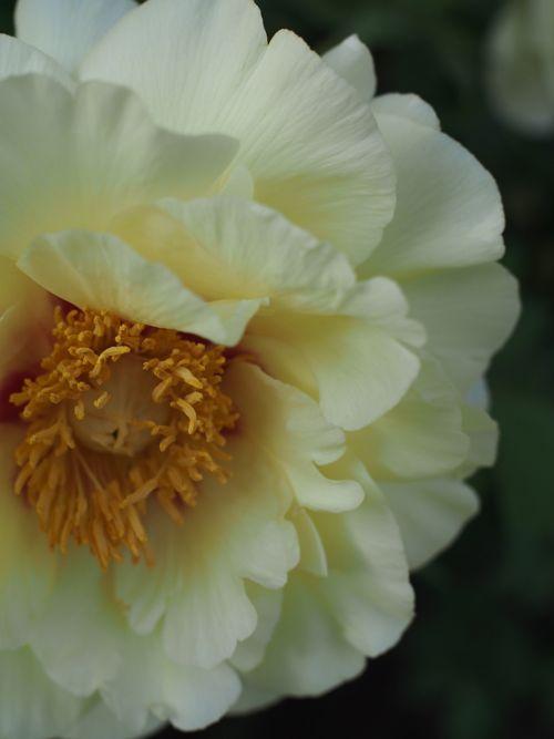 花ギフト|フラワーギフト|誕生日 花|カノシェ話題|スタンド花|ウエディングブーケ|花束|花屋|P1010578