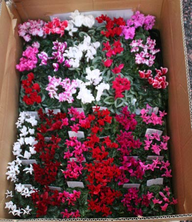 花ギフト|フラワーギフト|誕生日 花|カノシェ話題|スタンド花|ウエディングブーケ|花束|花屋|IMG_9976