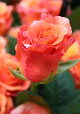 花ギフト|フラワーギフト|誕生日 花|カノシェ話題|スタンド花|ウエディングブーケ|花束|花屋|miruba