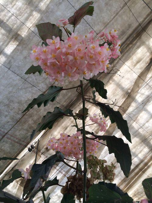 花ギフト|フラワーギフト|誕生日 花|カノシェ話題|スタンド花|ウエディングブーケ|花束|花屋|IMG_6788