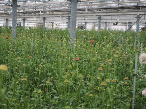 花ギフト|フラワーギフト|誕生日 花|カノシェ話題|スタンド花|ウエディングブーケ|花束|花屋|P1010083