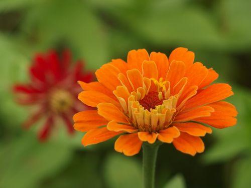 花ギフト|フラワーギフト|誕生日 花|カノシェ話題|スタンド花|ウエディングブーケ|花束|花屋|P8150165