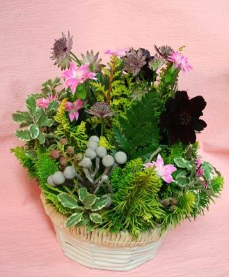 花ギフト|フラワーギフト|誕生日 花|カノシェ話題|スタンド花|ウエディングブーケ|花束|花屋|はなえちゃんヒバ