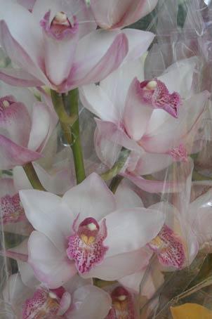 花ギフト|フラワーギフト|誕生日 花|カノシェ話題|スタンド花|ウエディングブーケ|花束|花屋|h2