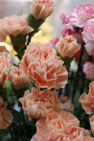 花ギフト|フラワーギフト|誕生日 花|カノシェ話題|スタンド花|ウエディングブーケ|花束|花屋|オレンジ