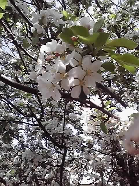 花ギフト|フラワーギフト|誕生日 花|カノシェ話題|スタンド花|ウエディングブーケ|花束|花屋|11-04-17_004