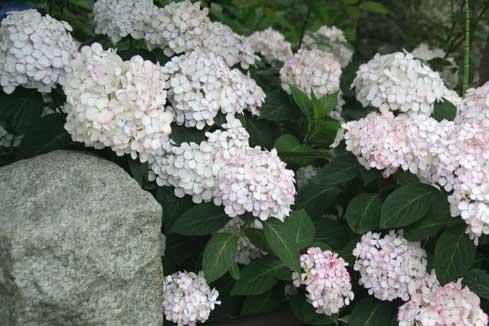 花ギフト フラワーギフト 誕生日 花 カノシェ話題 スタンド花 ウエディングブーケ 花束 花屋 白ピンク