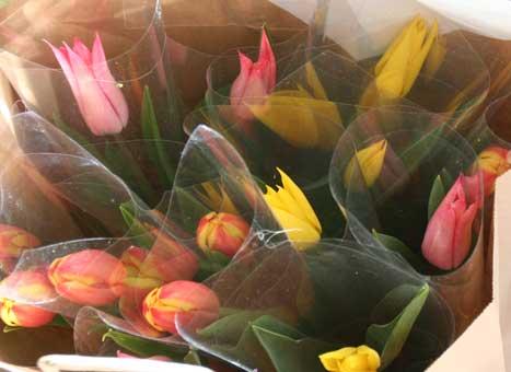 花ギフト|フラワーギフト|誕生日 花|カノシェ話題|スタンド花|ウエディングブーケ|花束|花屋|リップ1本