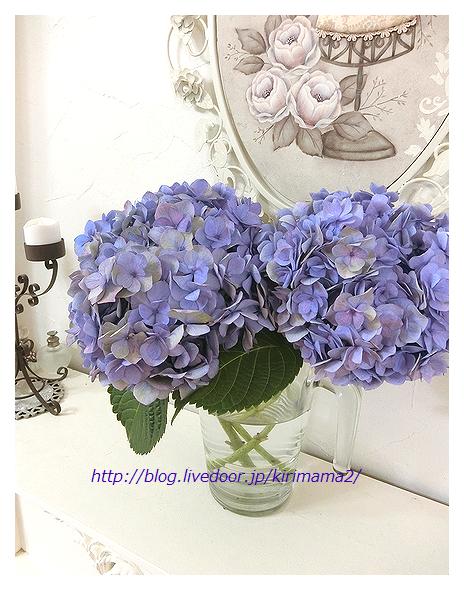 50代紫陽花