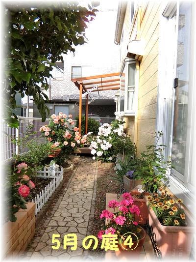 5月の庭4