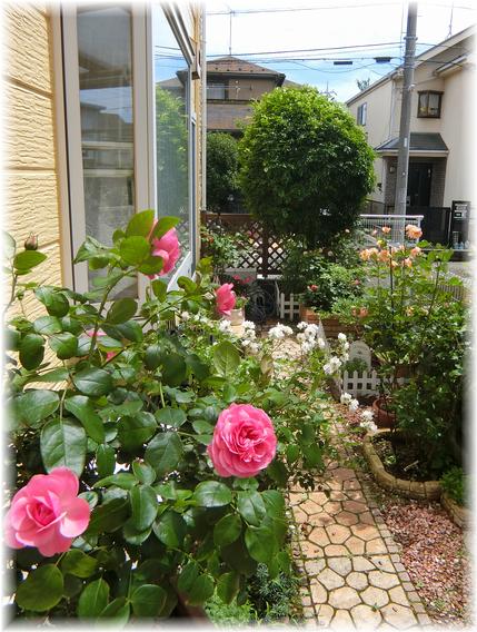 薔薇の風景