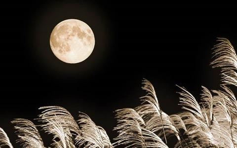 moon-susuki