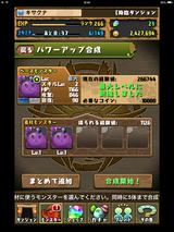 IMG_2448