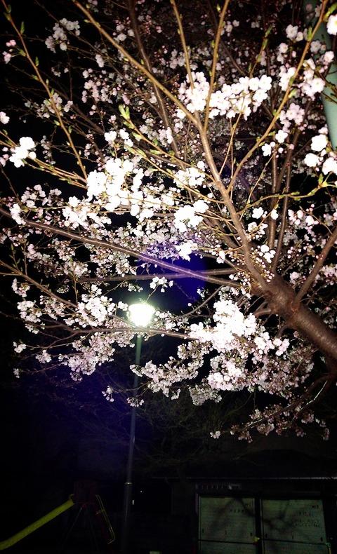 2015-03-28-23-12-41_deco