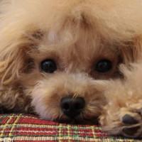 s_051707-dog-photo