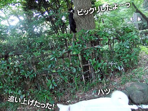 c9ed9ab6.jpg