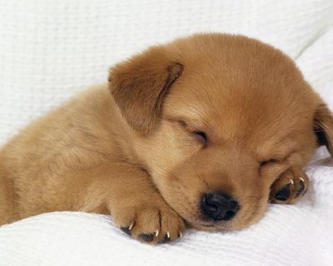犬の写真-1024x1280