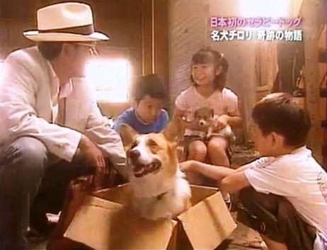 日本発のセラピー犬チロリの感動実話。 (3)