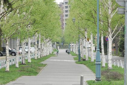 2008-07白樺