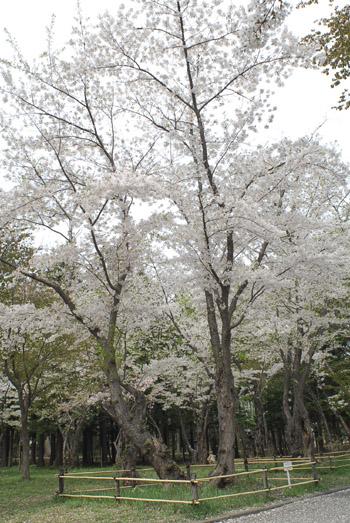 2円山公園333