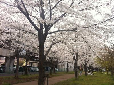 写真 2013-03-26 14 31 48