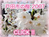 戸田市の桜2007