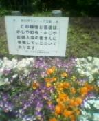 戸田市かじや町会が育てている草花