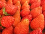美園いちごランドの章姫(あきひめ)イチゴ