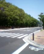 戸田市 市役所南通り(後谷公園辺り)