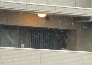 戸田市に降る雪
