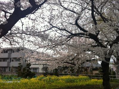 写真 2013-03-26 15 10 47
