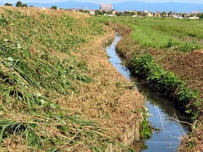 水路管理用農道