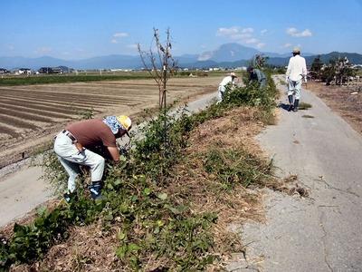 桜並木除草作業
