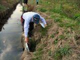 小動物の穴と流出してしまった水路溝畔の土